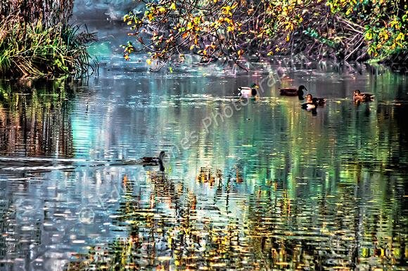 Autumn Duck Pond Sussex Final