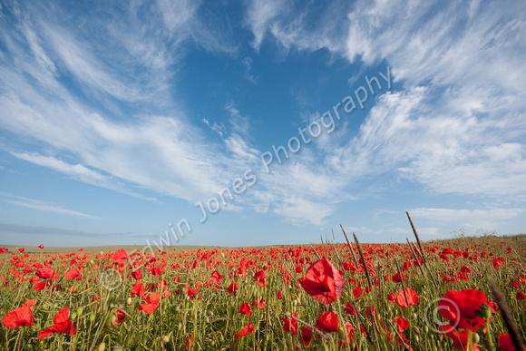 Poppy Field Sky Hole Original