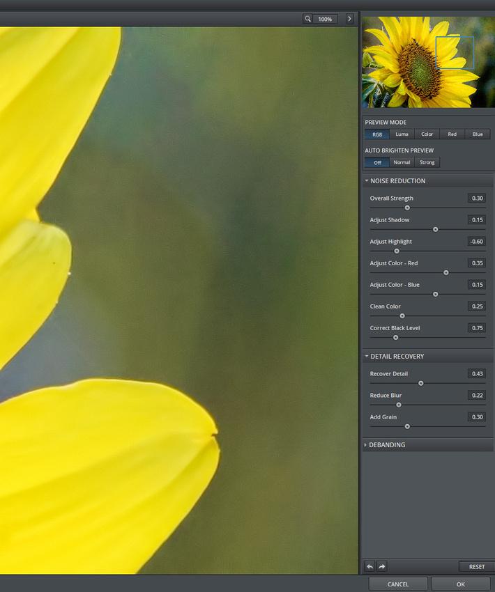 SunflowerDenoiseAfter