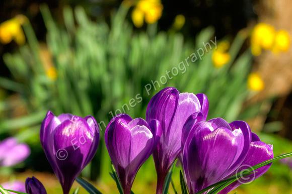 February Spring Bognor Regis Tonemapped