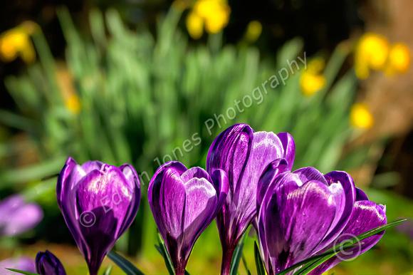 February Spring Bognor Regis Final