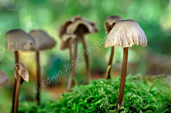 South Downs Fungi  Final