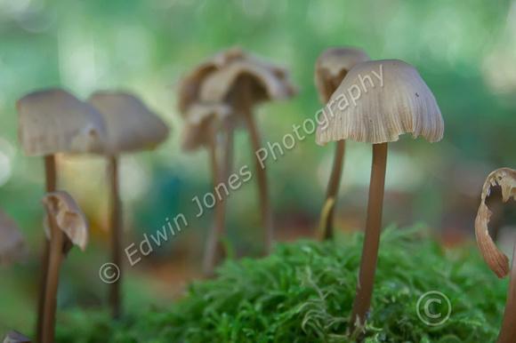 South Downs Fungi  Original