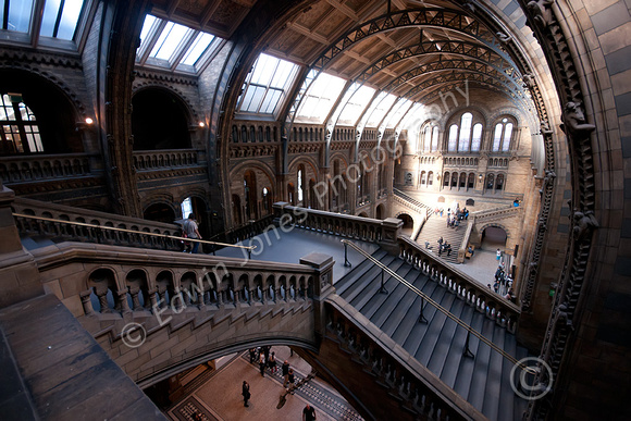 Natural History Museum Staircase to Hogwarts Original
