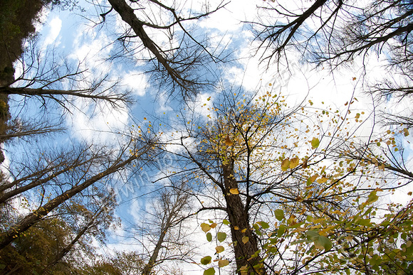 Arundel Autumn Sky Original