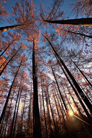Woodland Autumn Dawn Final