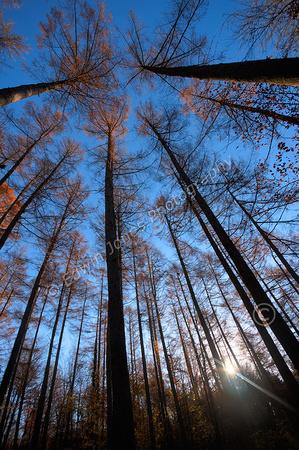 Woodland Autumn Dawn Tonrmapped