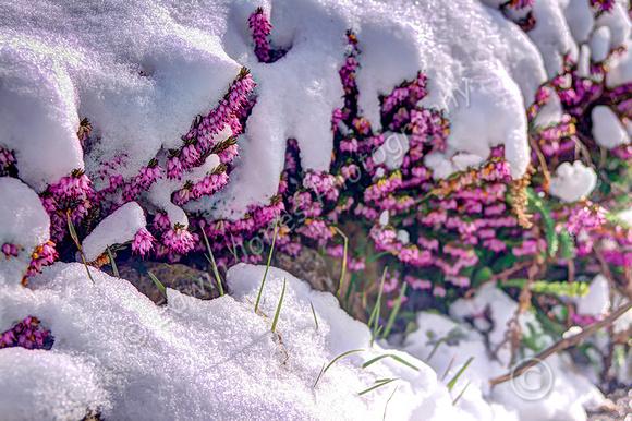 Blanket of Winter Over Spring Tonemapped