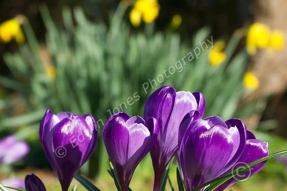 February Spring Bognor Regis Original