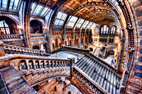 Natural History Museum Staircase to Hogwarts