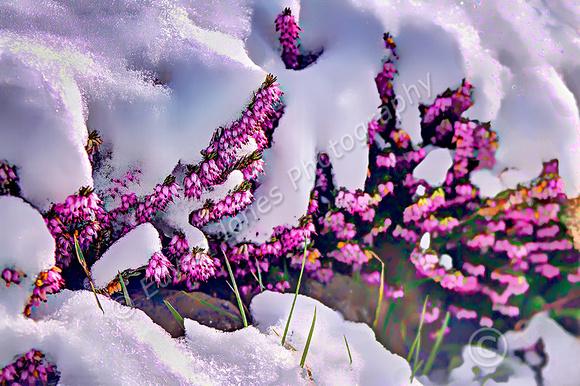 Blanket of Winter Over Spring Final